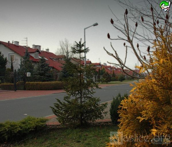 maslicka_wiosna_II_31