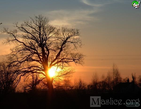 maslicka_wiosna_II_38
