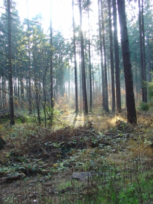 Las Mokrzański
